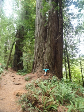 Hugging a Redwood